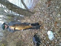 nice carp in the cold