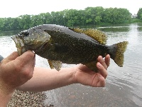 river smallie